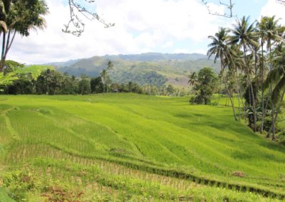 Cambuyo Rice Terraces